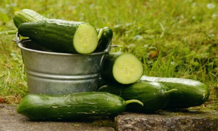 Five fun facts about cucumbers (they were used to set a Guinness World Record)
