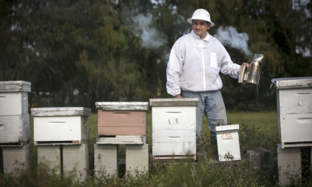 Video shows how Amsterdam is helping bees