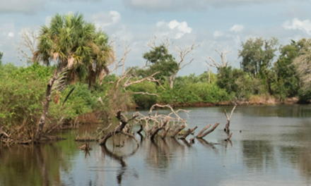 SFWMD report shows most water flow, nutrients enter Lake Okeechobee from north