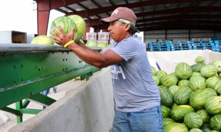 Frey Farms among Florida growers reducing food waste