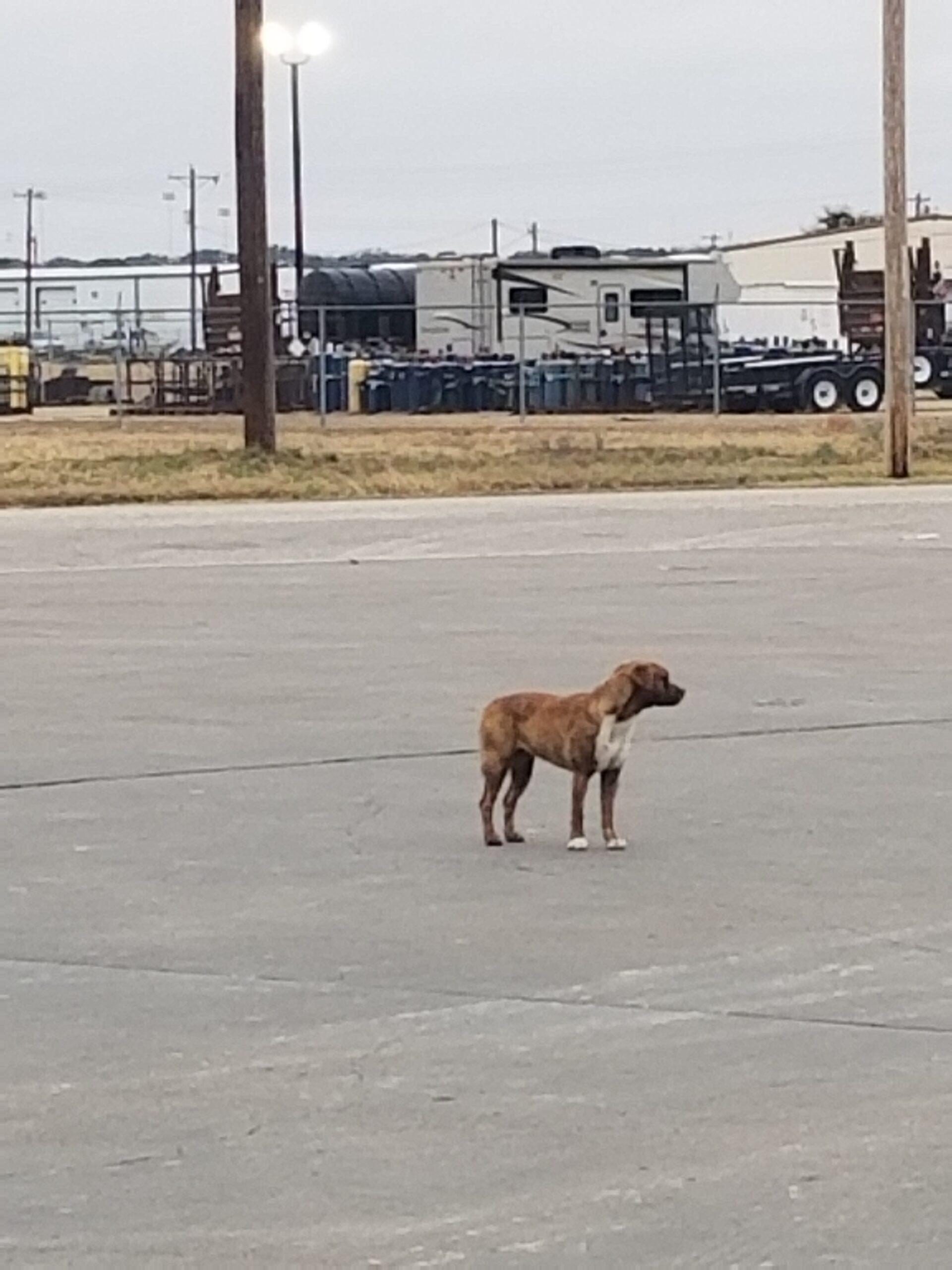 Found Dog   Unknown   Unknown