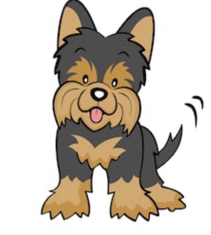 Found Dog   Female Terrier  Mix