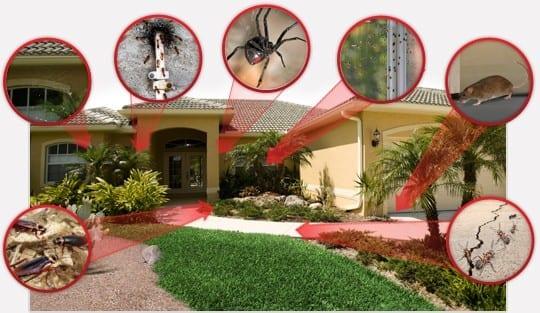 bug proof avondale home