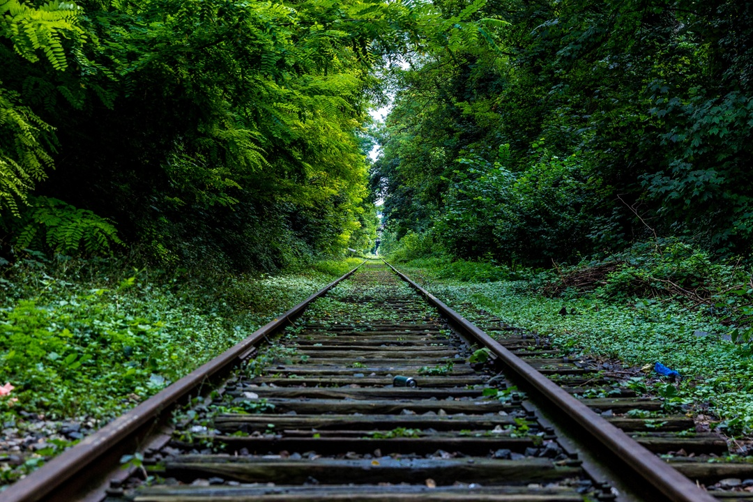 Beautiful railroad tracks with forest