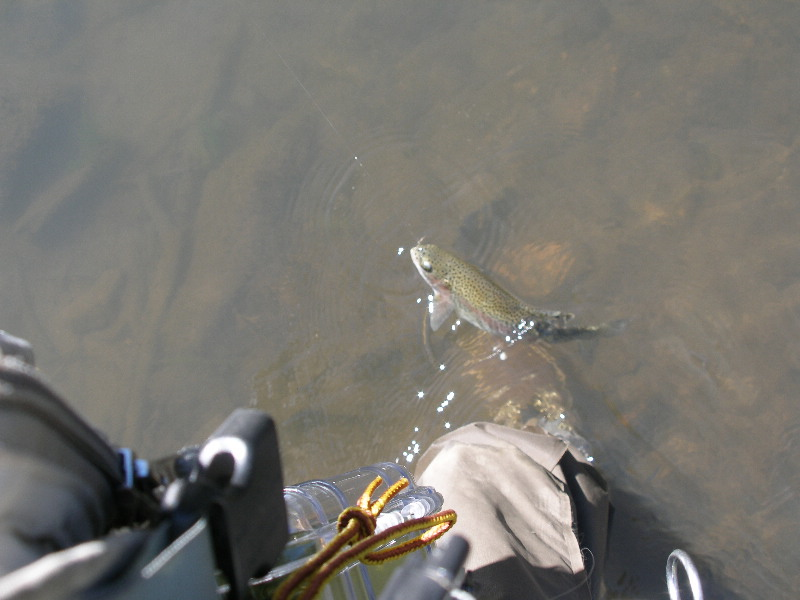 Another Rainbow on BWO