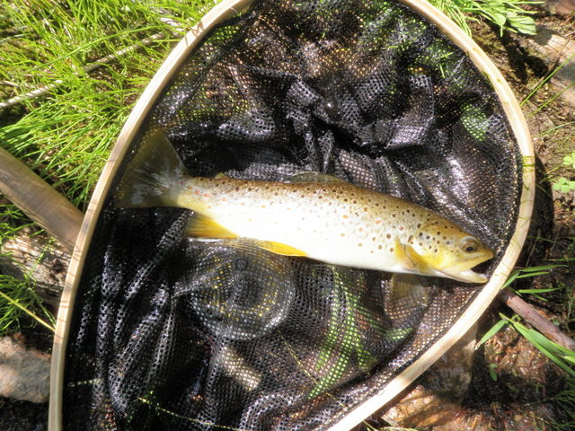 Fairly Typical Brown from Bear Creek
