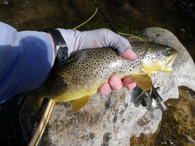 This Brown Was Caught in Shallow Water