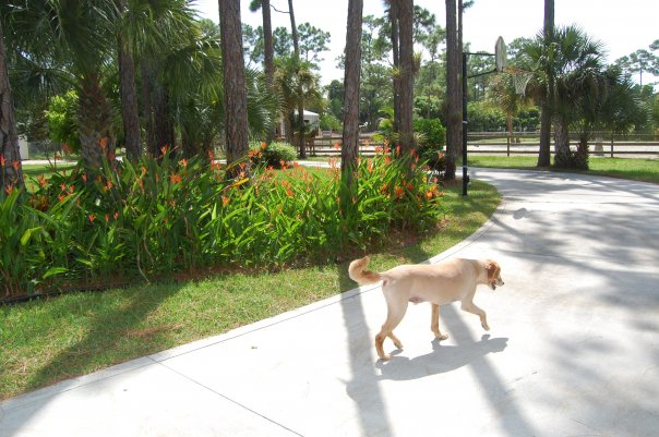west palm beach pet sitting