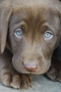 puppy-eyes-sad-cute-animal-puppies-pictures-pics