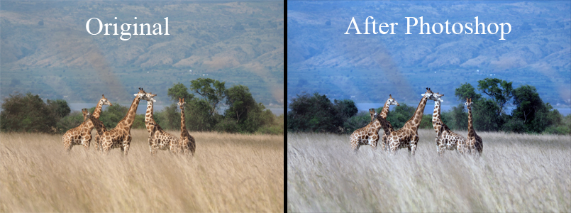 In this picture, Photoshop added more blue-ish to the background and make the grass duller.