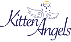 Kitten Angels