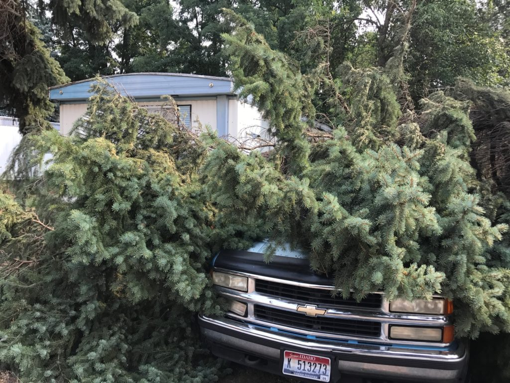 tree laying on top of parked cars