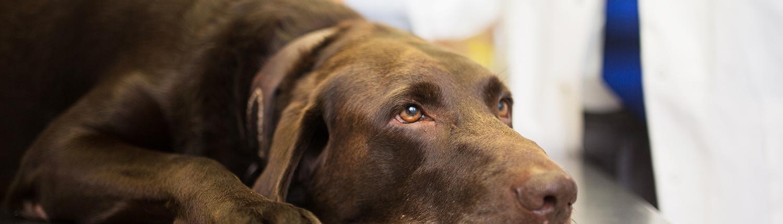 senior pet at veterinarian for hospice care