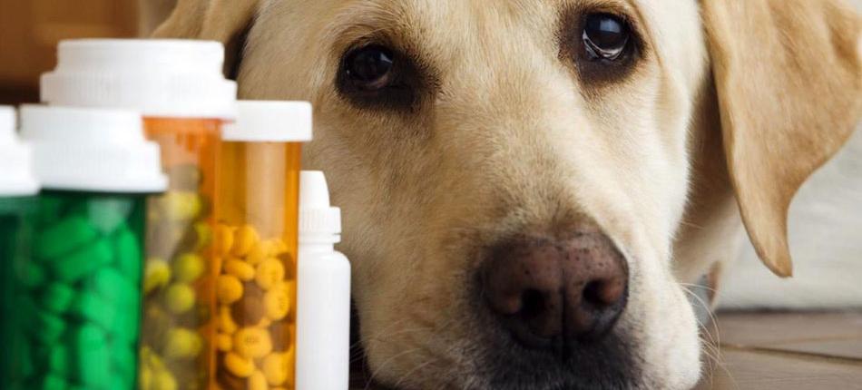 sick dog with medicine bottles