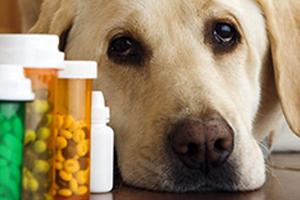 sick dog with pet medicine