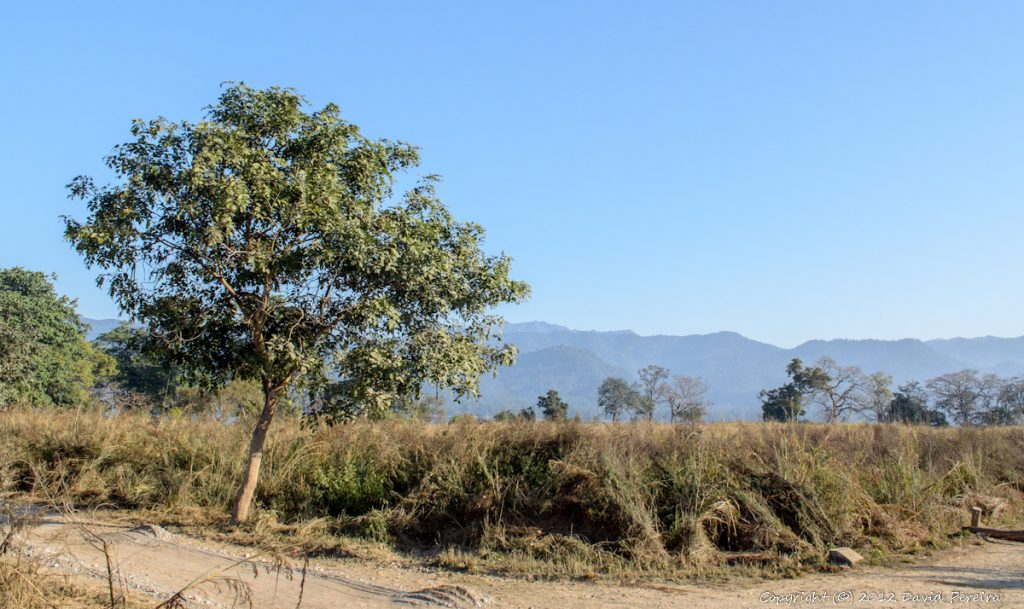 Wild Life, Corbett Tiger Reserve, Nature, National Parks