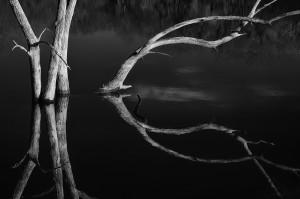 1-Reflection AnnieLu