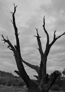 7-Winter Branches RosaWan