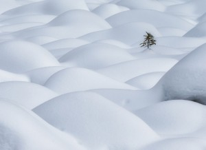 Lone Pine in Snow Dunes 雪浪孤树 Michael Zheng