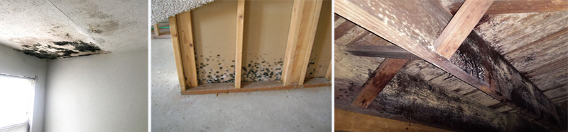 Indianapolis mold removal contractor