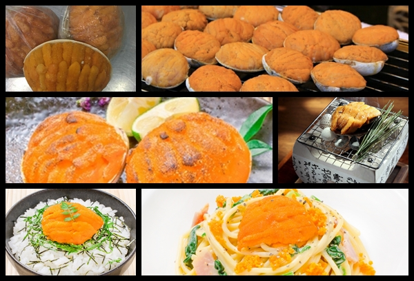 Cooked Uni in shell Image