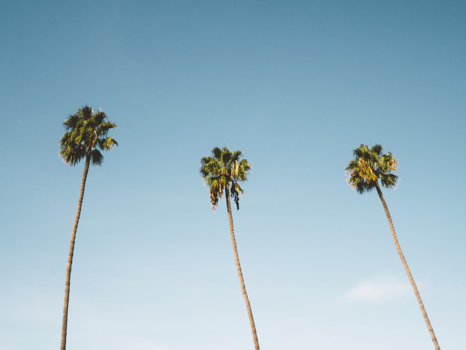 San Diego ARHE 2020