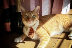 City The Kitty Tie