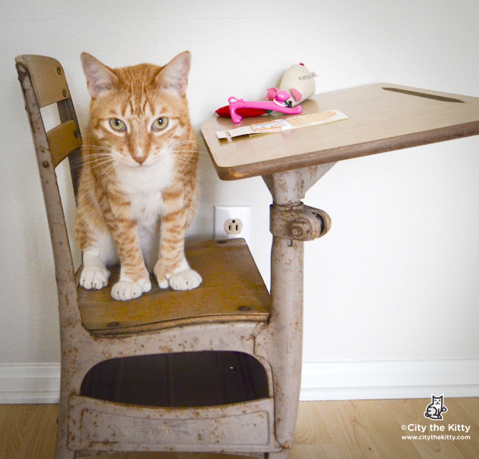 City the Kitty sitting on a Desk