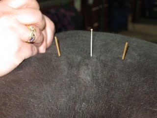 Equine Acupuncture