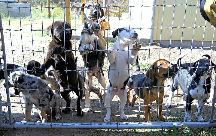 puppies-at-fence