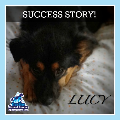 Lucy Success