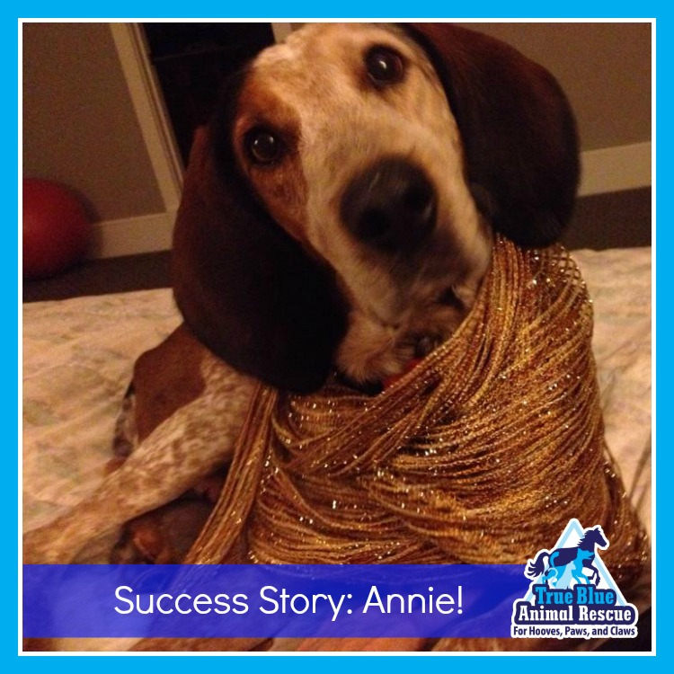 AnnieSuccess