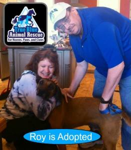 Roy_Adopted_Success Story_ TBAR True Blue Animal Rescue