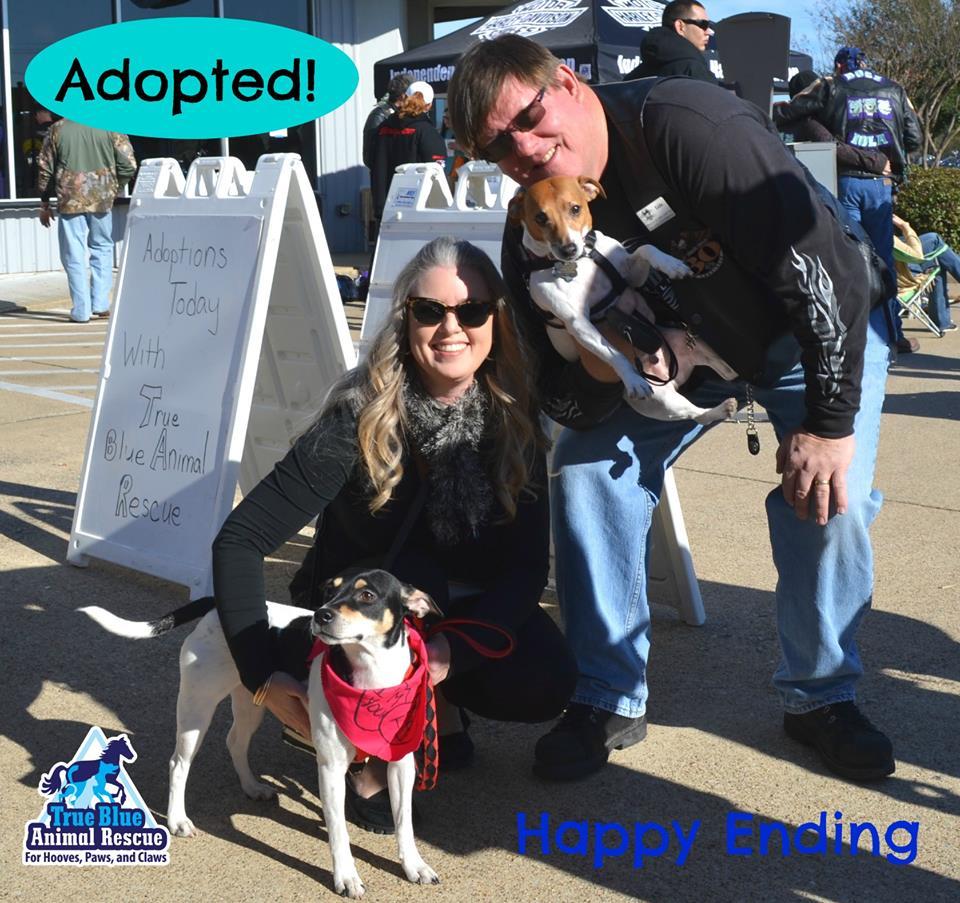 TBAR-Success-Nina-Dog-Adopted
