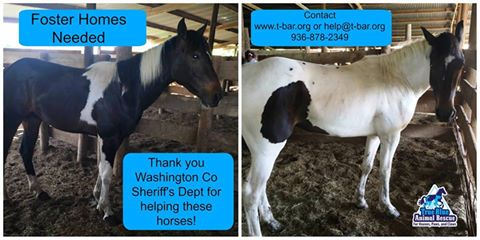 TBAR-Newest-Rescue-Horses-April-2016
