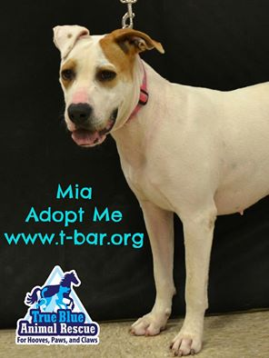 TBAR-Pet-of-the-week-Mia