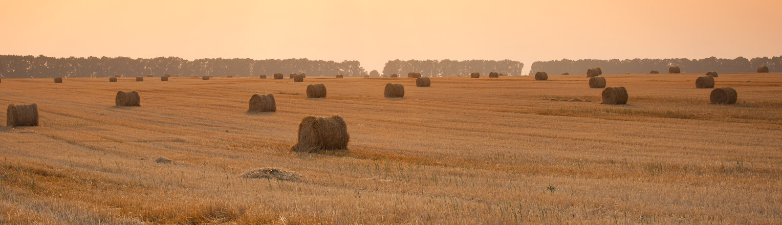 round bales scattered around a field