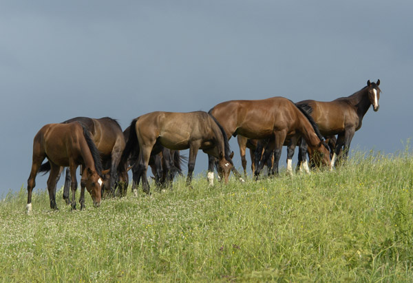 Horses grazing on a hilltop