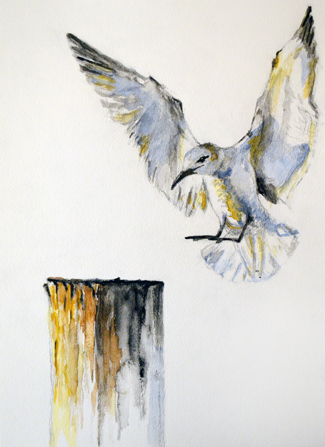 17-Seagull_Watercolor