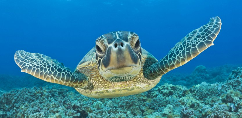 scuba dive with turtles in jupiter, florida
