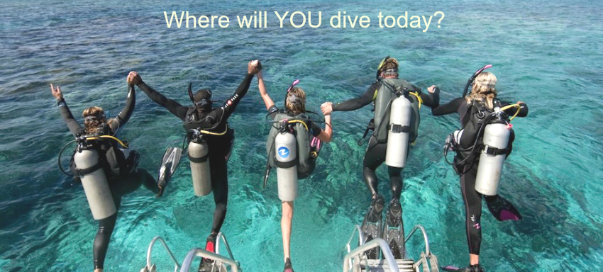 Where will YOU dive today?