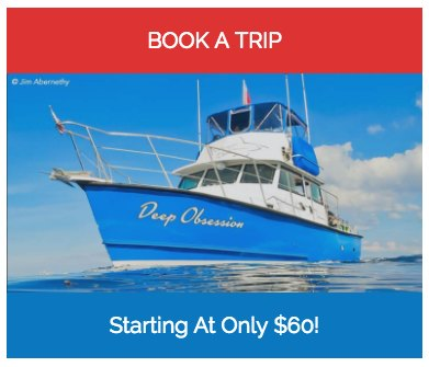 Deep Obsession Charters
