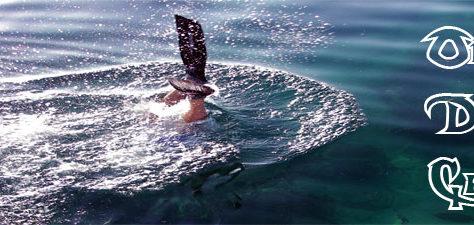 offshore dive charters fl