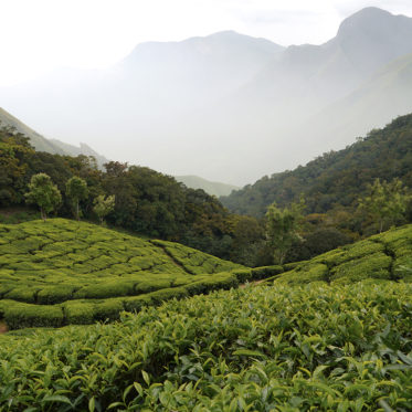 Munnar, Kerala, India, Tea plantations, hotels in munnar, tours in munnar