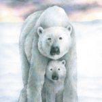 Polar Bear Mother Drawing