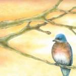 Bluebird Drawing