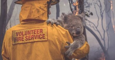 Here's How To Help Australia: All You Need To Know About Rescue & Recovery Groups