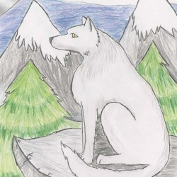 Drawing - Wolf