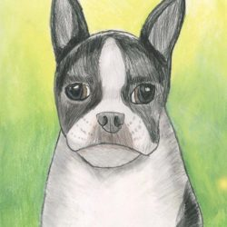 Drawing - Boston Terrier