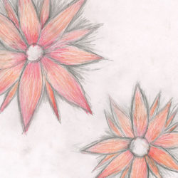 Drawing - Flowers